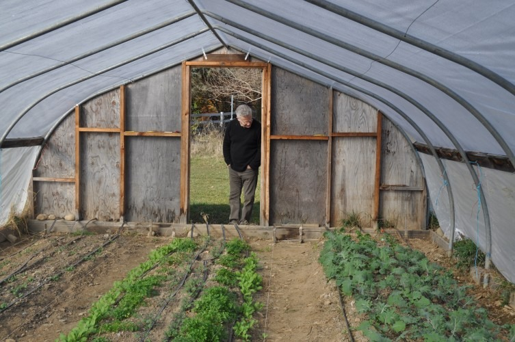 Larry Steel peers into the greenhouse at Great Song Farm