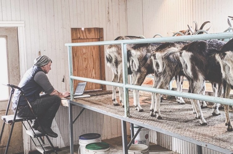 Farmer Lee Hennessy in goat milking parlor